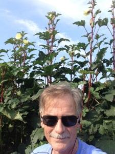 tall red okra